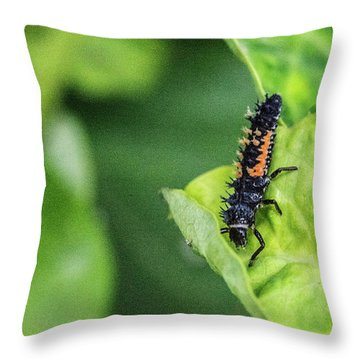 Scavenging Crysomelid Larva Throw Pillow