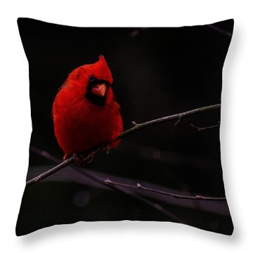 Throw Pillow featuring the photograph Scene Stealer  by John Harding