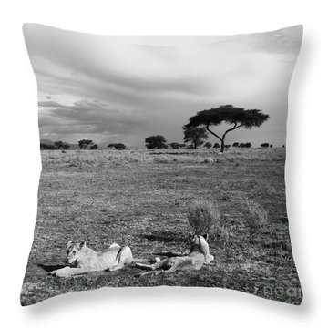 Lion Pause Throw Pillow