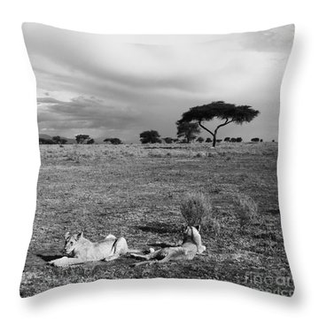 Lion Pause Throw Pillow