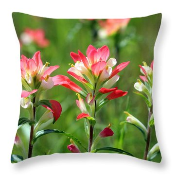 Scenic Paints Throw Pillow