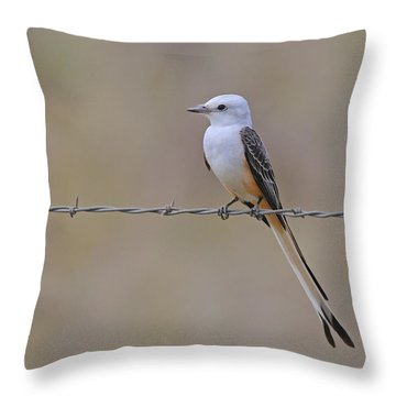 Scissor-tailed Flycatcher Throw Pillow by Tony Beck