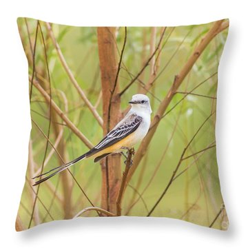 Scissortail In Scrub Throw Pillow by Robert Frederick