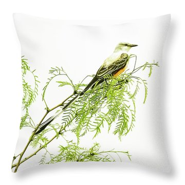 Scissortail On Mesquite Throw Pillow by Robert Frederick