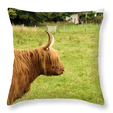 Throw Pillow featuring the photograph Scottish Cattle Farm by Christi Kraft