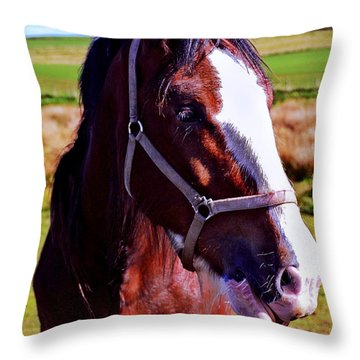 Scottish Clydesdale  Throw Pillow by Roger Wedegis