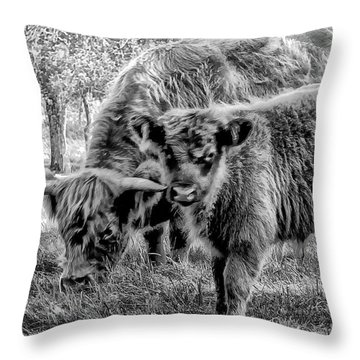 Scottish Highland Cattle Black And White Throw Pillow by Constantine Gregory
