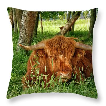 Throw Pillow featuring the photograph Scottish Higland Cow by Patricia Hofmeester