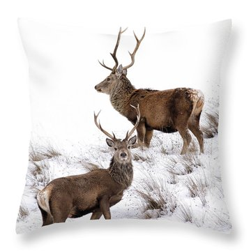 Throw Pillow featuring the photograph Scottish Red Deer Stags by Grant Glendinning