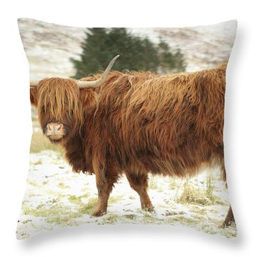 Scottish Red Highland Cow In Winter Throw Pillow