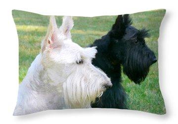 Scottish Terrier Dogs Throw Pillow by Jennie Marie Schell