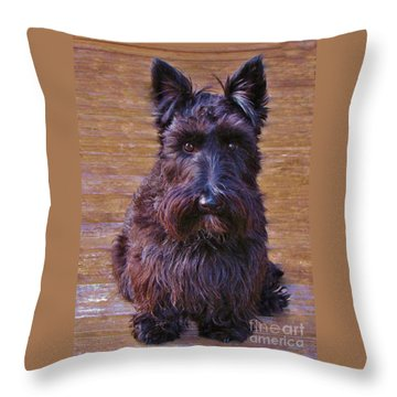 Throw Pillow featuring the photograph Scottish Terrier by Michele Penner