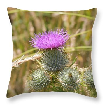 Scottish Thistle Throw Pillow