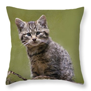 Scottish Wildcat Kitten Throw Pillow