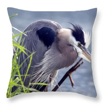 Scratch The Itch Throw Pillow