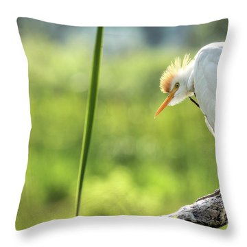 Scratching  Throw Pillow