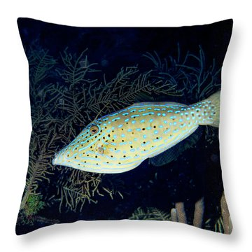 Throw Pillow featuring the photograph Scrawled Filefish by Jean Noren
