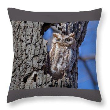 Throw Pillow featuring the photograph Screech Owl #1 by Paul Schultz