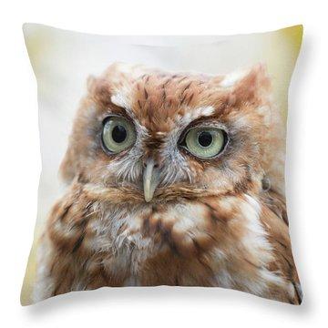 Screech Owl 2 Throw Pillow