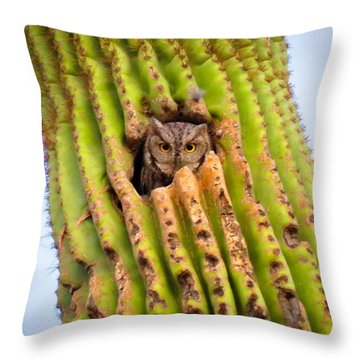 Screech Owl In Saguaro Throw Pillow