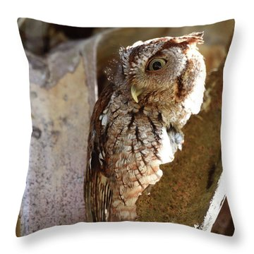 Throw Pillow featuring the pyrography Screech Owl On The Lookout by Sally Sperry
