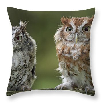 Screech Owl Pair Throw Pillow
