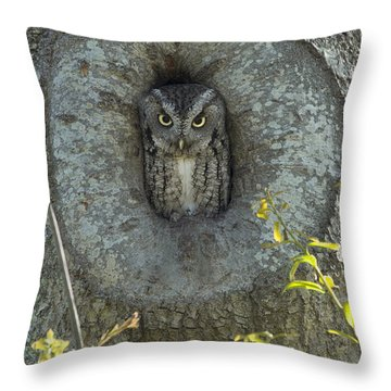 Screech Owl Stare Down Throw Pillow by D Wallace