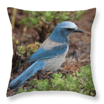 Scrub Jay Framed In Green Throw Pillow