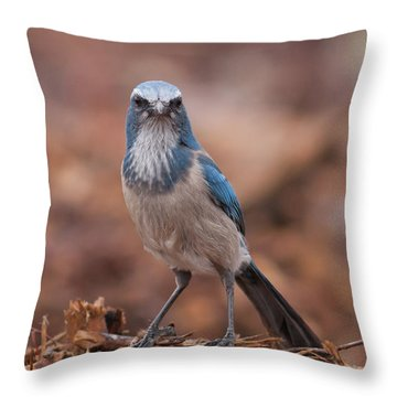 Scrub Jay On Chop Throw Pillow