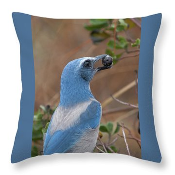 Scrub Jay With Acorn Throw Pillow