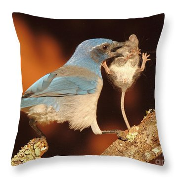Scrub Jay With Jumping Mouse In Grasp Throw Pillow by Max Allen