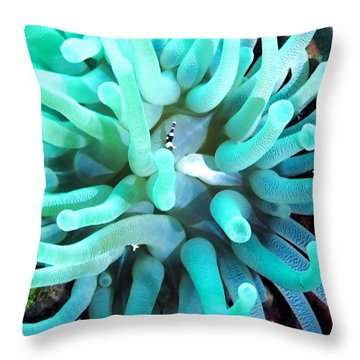 Sea Anemone And Squat Shrimp Throw Pillow