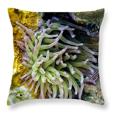 Throw Pillow featuring the photograph Sea Anemone And Squirrelfish by Perla Copernik