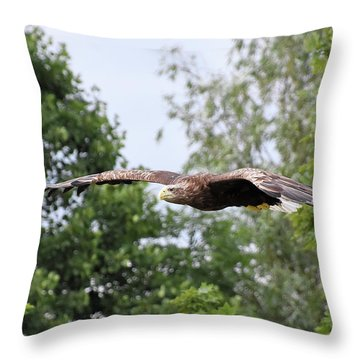 Sea Eagle Throw Pillow