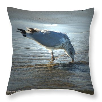 Sea Gull At Sundown Throw Pillow