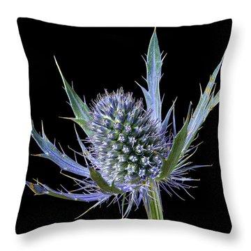 Sea Holly Eryngium Throw Pillow