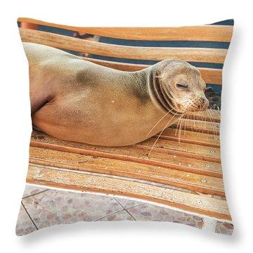 Sea Lion On A Bench, Galapagos Islands Throw Pillow
