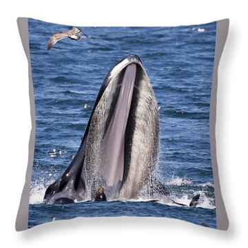 Sea Lions Are Friends, Not Food Throw Pillow