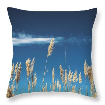 Throw Pillow featuring the photograph Sea Oats On A Blue Day by Colleen Kammerer