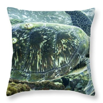 Sea Of Cortez Green Turtle Throw Pillow
