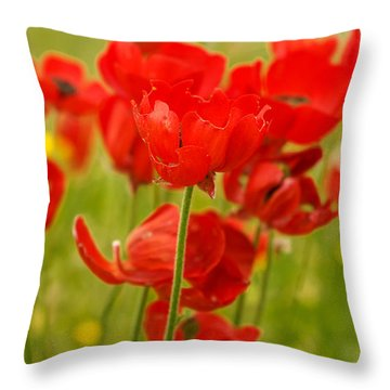 Sea Of Red Buttercups Throw Pillow
