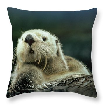 Sea Otter  Throw Pillow by Tim Fitzharris