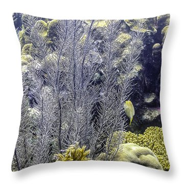Throw Pillow featuring the photograph Sea Plumes Coral 2 by Perla Copernik