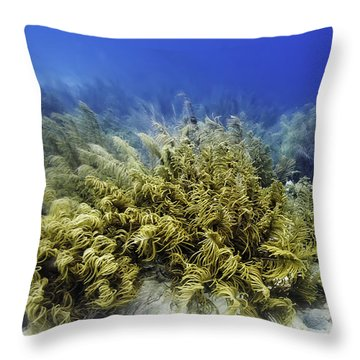 Throw Pillow featuring the photograph Sea Rod Corals  by Perla Copernik