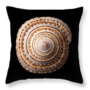 Sea Shell Known As Staircase Or Sundial Throw Pillow by Jim Hughes