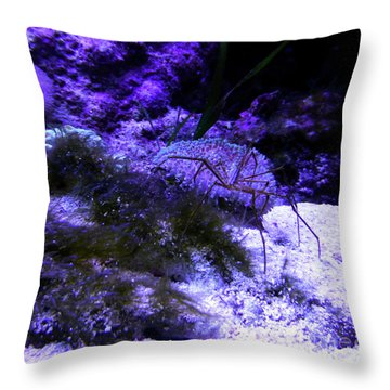 Sea Spider Throw Pillow