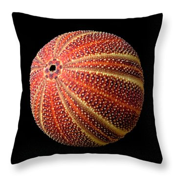 Sea Urchin 2 Throw Pillow by Jim Hughes