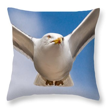 Seabird Closeup Throw Pillow