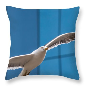 Seabird Flying On The Glass Building Background Throw Pillow