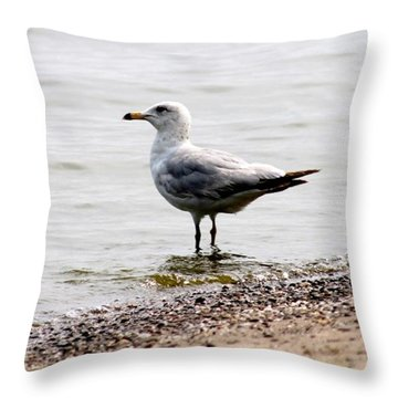 Seagull At Durand Throw Pillow